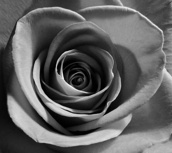 Photograph - Perfection In Monotone by Grace Dillon