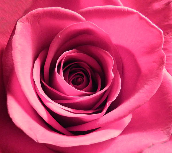 Photograph - Perfection In Pink by Grace Dillon