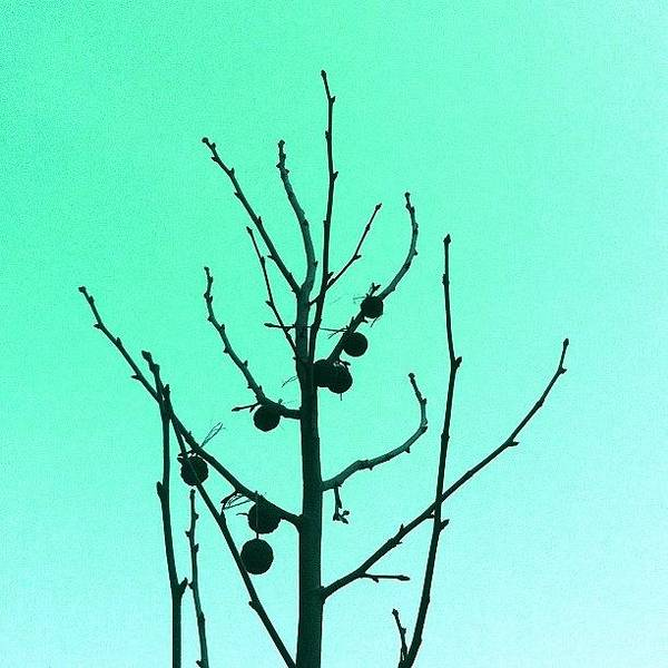 Minimalism Photograph - Perfection. Remixed by Courtney Haile