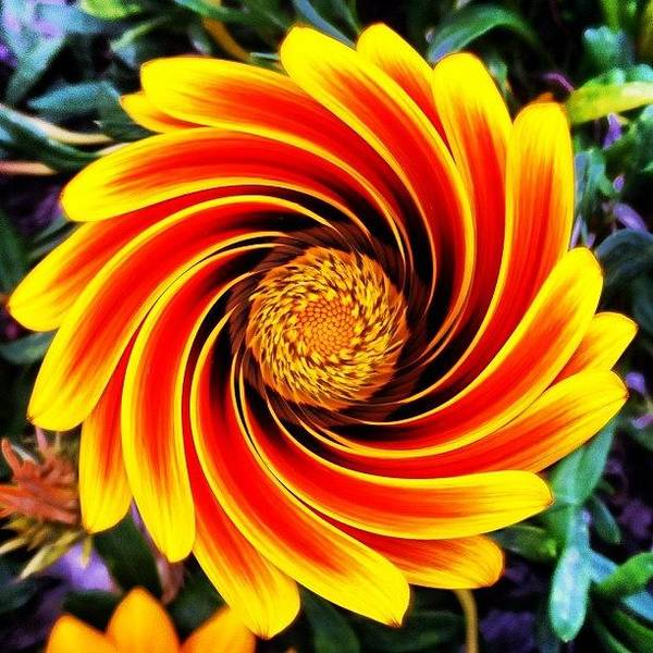 Spring Photograph - Perfumed Wormhole by Cameron Bentley