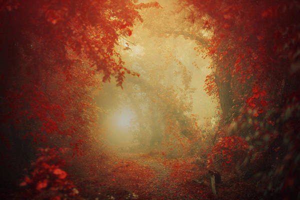 Wall Art - Photograph - Personal Journey by Ildiko Neer