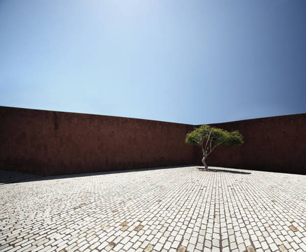 Copy Photograph - Perspective View On Square With Tree by Stanislaw Pytel
