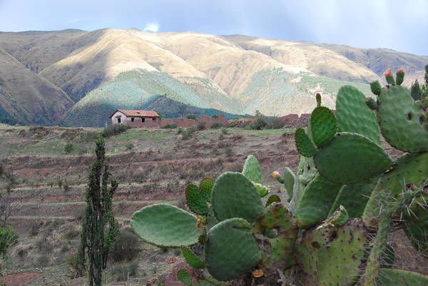 Photograph - Peru Agriculture And Countryside by Cascade Colors