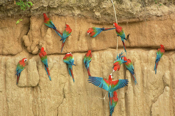 Wall Art - Photograph - Peru, Amazon River Basin, Madre De Dios by Jaynes Gallery