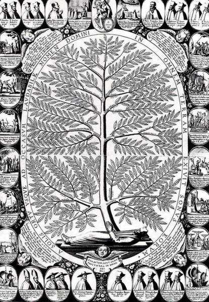 Healing Drawing - Peruvian Bark Or Jesuit Tree by Unknown