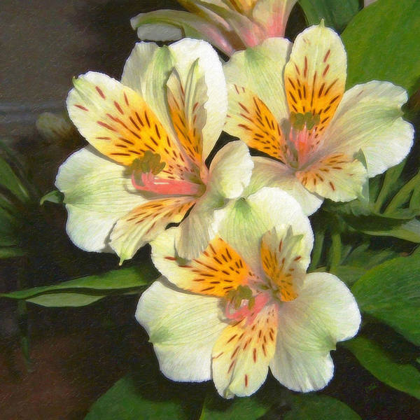 Painting - Peruvian Lily Alstroemeria by Dean Wittle