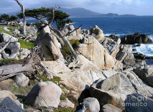 Photograph - Pescadero Point by James B Toy