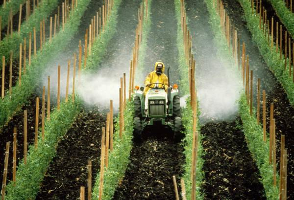 Bug Man Photograph - Pesticides by Richard Hansen