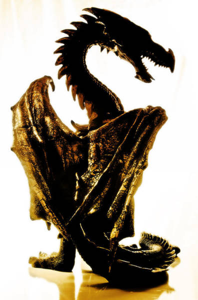 Wing Back Photograph - Golden Dragon by Damian M Photographer
