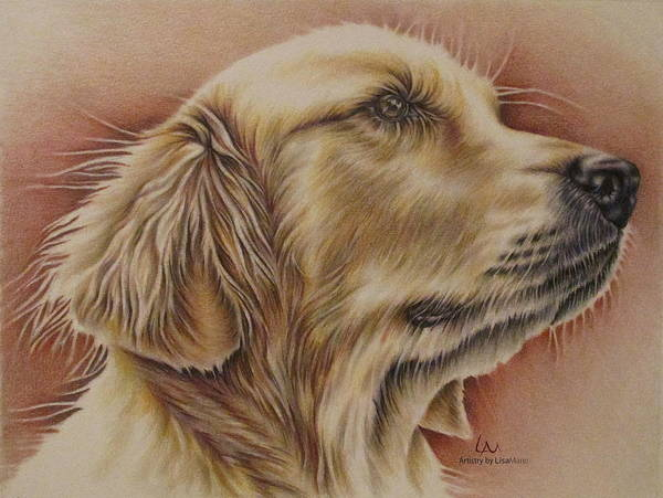 Furry Drawing - Pet Portrait - Goldie by Lisa Marie Szkolnik