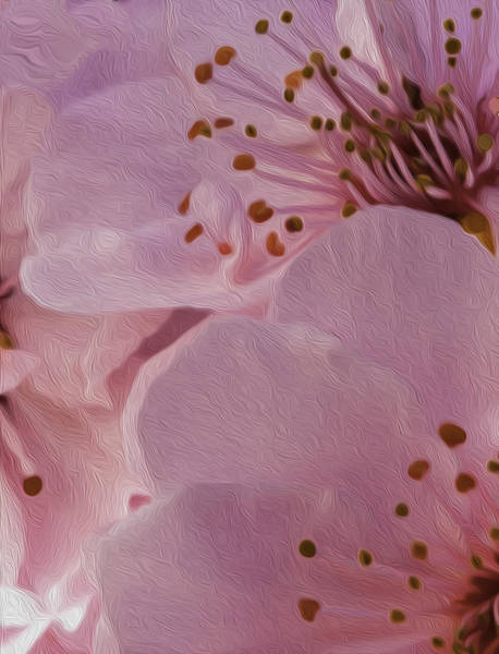 Wall Art - Photograph - Petal And Stamens by Nancy Marie Ricketts