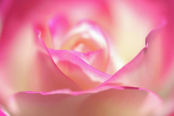 Petal Photograph - Petal by Hihap7