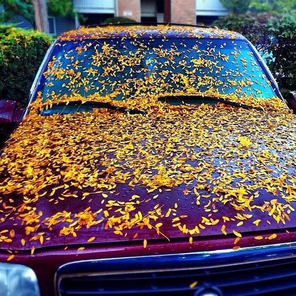Petals Wall Art - Photograph - Petal Shower by Michael Gonzalez