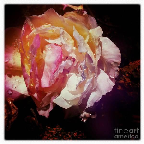 Photograph - Petals by Denise Railey