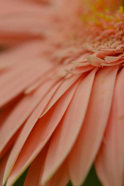 Photograph - Petals Of Grace by Melanie Moraga