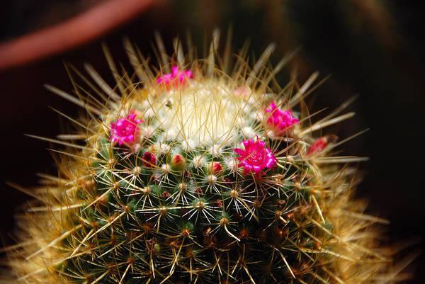 John Schneider Wall Art - Photograph - Petite Cactus by John Schneider