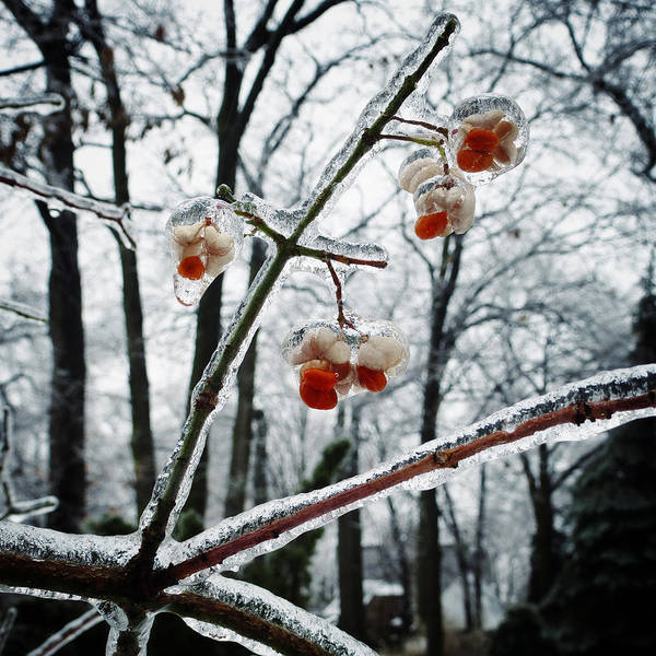 Photograph - Petites Fleurs D'hiver by Natasha Marco