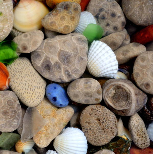 Pebble Beach Photograph - Petoskey Stones V by Michelle Calkins
