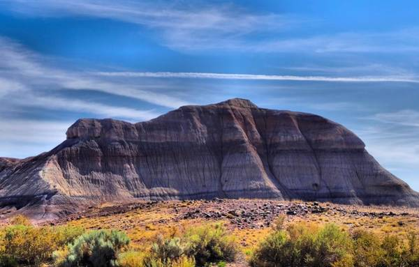 Photograph - Petrified Forest Landscape by Dan Sproul