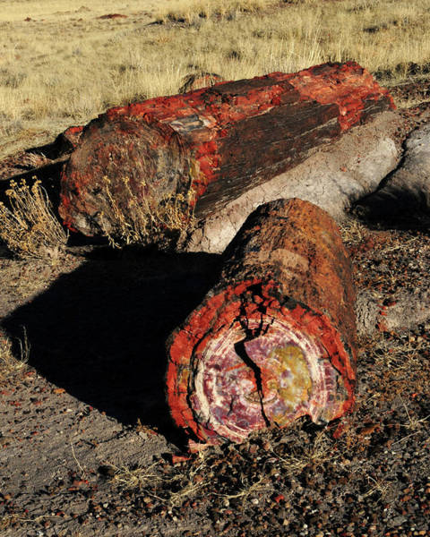 Petrified Wood Photograph - Petrified Logs, Petrified National by Michel Hersen