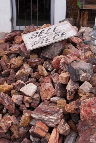 Petrified Logs Photograph - Petrified Wood For Sale In Arizona by Mark Williamson/science Photo Library