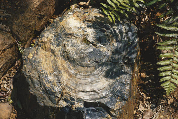 Wall Art - Photograph - Petrified Wood In South Africa by Carleton Ray