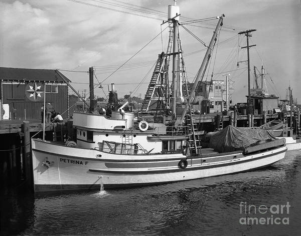 Photograph - Petrina F Purse Seiners Monterey Circa 1947 by California Views Archives Mr Pat Hathaway Archives