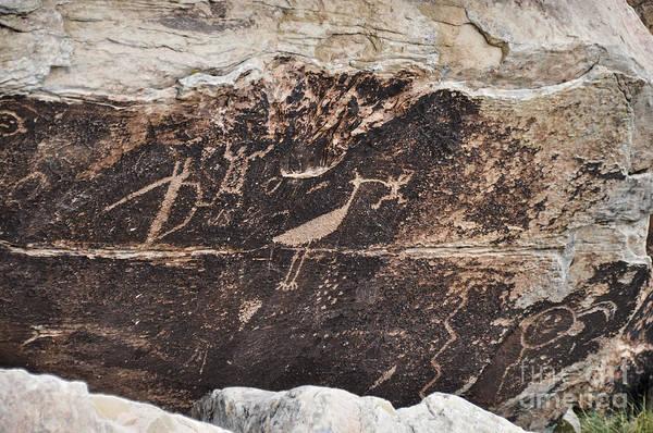 Photograph - Petroglyph Bird by Cheryl McClure
