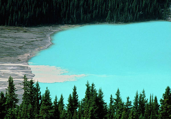 Peyto Lake Wall Art - Photograph - Peyto Lake by David Nunuk/science Photo Library
