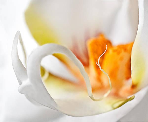 Photograph - Phalaenopsis Orchid Macro by Ginger Wakem
