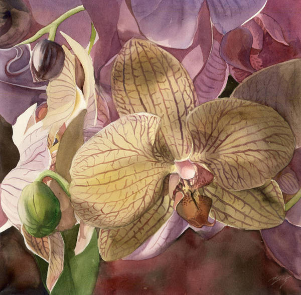 Painting - Phalaenopsis Orchid With Pinks by Alfred Ng