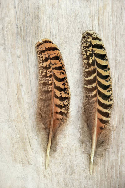 Wall Art - Photograph - Pheasant Feather by Cora Niele