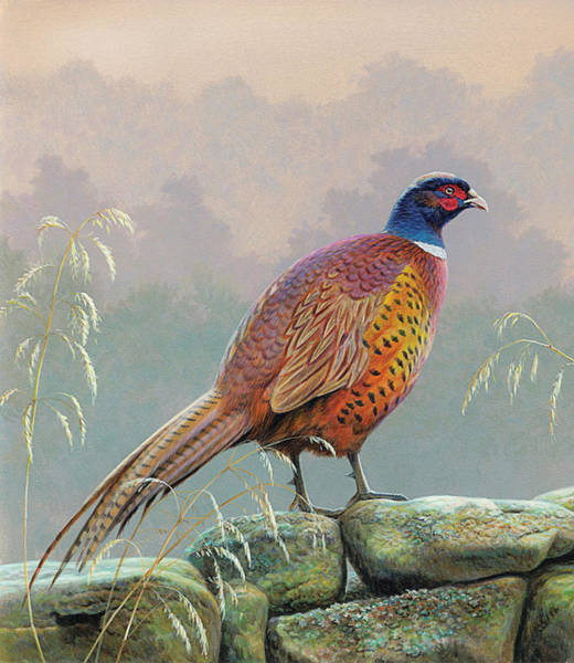 Beauty Of Nature Digital Art - Pheasant Standing On Stone Wall by Andrew Hutchinson