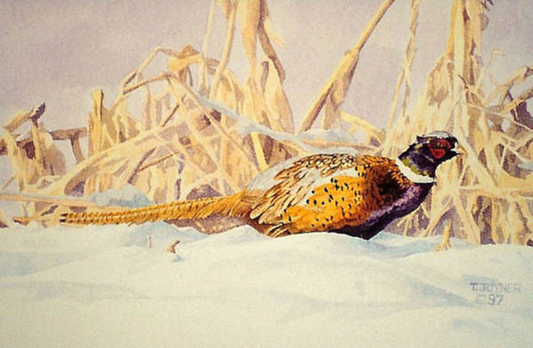 Photograph - Pheasant by Tim  Joyner