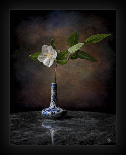 Photograph - Philadelphus In Vase by Endre Balogh