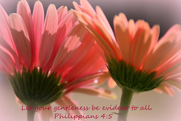 Wall Art - Photograph - Philippians 4 5 Gerber Daisies by Lisa Wooten