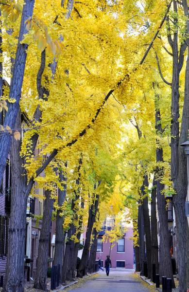 Rittenhouse Square Wall Art - Photograph - Philly In The Fall by Andrew Dinh