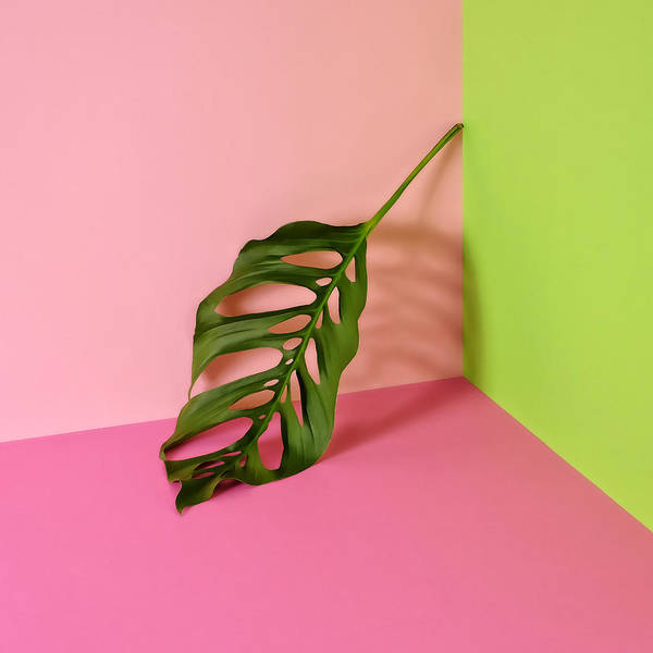 Sparse Photograph - Philodendron Leaf Leaning In Corner Of by Juj Winn