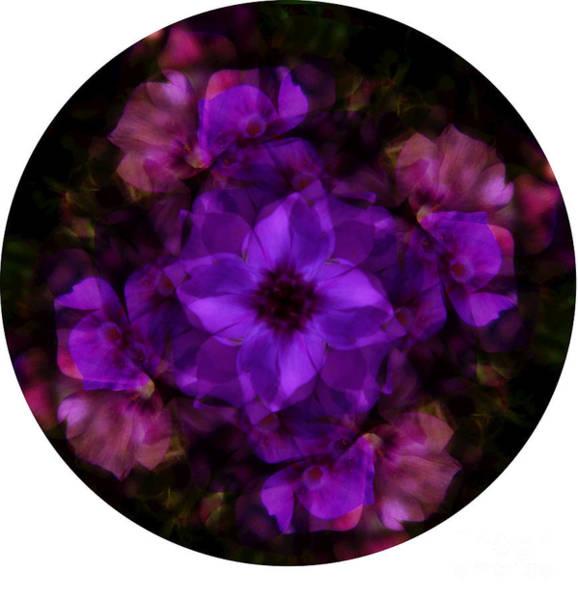 Digital Art - Phlox Kaleidoscope by D Hackett