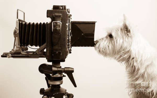 Photograph - Pho Dog Grapher by Edward Fielding