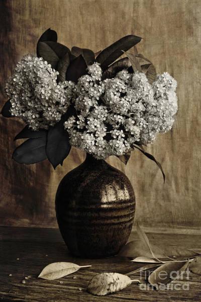 Photograph - Photinia by Elena Nosyreva