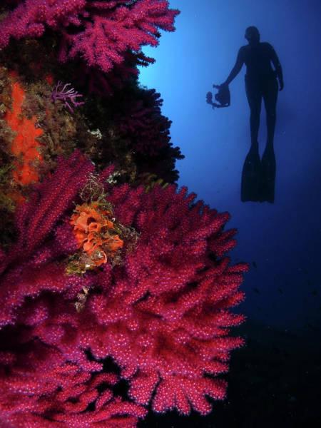 Underwater Photograph - Photo Apnea by Imagen Rafael Cosme Daza   Www.rafaelcosme.com