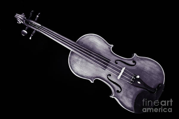 Photograph - Photograph Of A Viola Violin Antique In Sepia 3376.01 by M K Miller