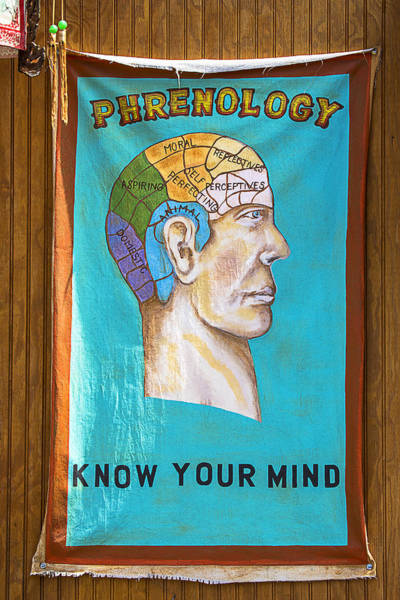 Philosophy Photograph - Phrenology by Garry Gay