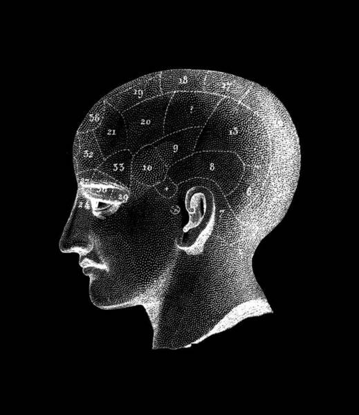 Traits Photograph - Phrenology Head by Cordelia Molloy/science Photo Library