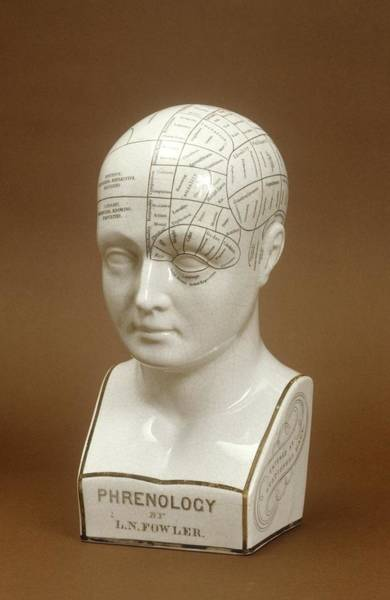 Nineteenth Century Photograph - Phrenology Head by Science Photo Library