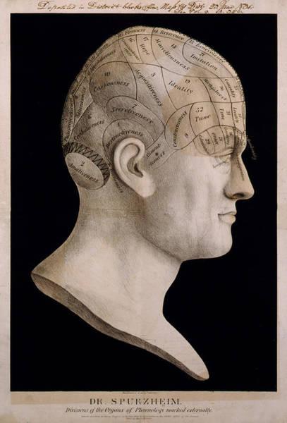 Humanity Digital Art - Phrenology by Georgia Fowler