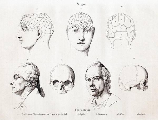 Wall Art - Photograph - Phrenology Of Famous Heads by Paul D Stewart