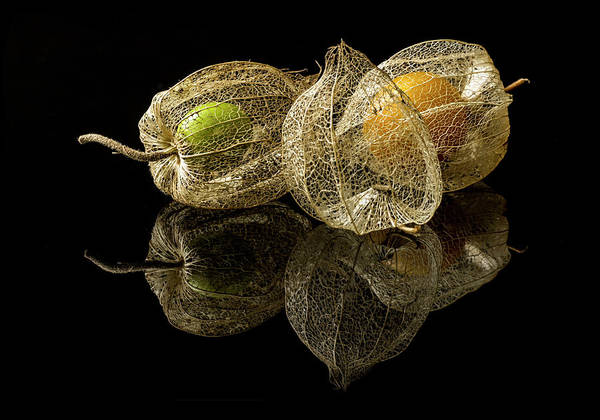 Wall Art - Photograph - Physalis Alkekengi L. by Gaberkosir