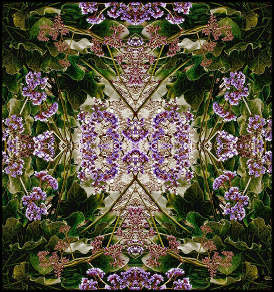 Photograph - Phyto-photo 2 by Douglas MooreZart